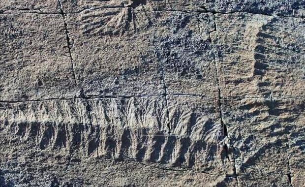 Phát hiện hóa thạch loài thú răng chạm có niên đại 16.000 năm tại Uruguay - Ảnh 1.