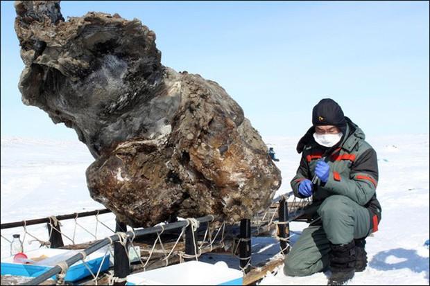 Nga chi 5,9 triệu USD cho nghiên cứu hồi sinh động vật tiền sử như trong Jurassic World - Ảnh 3.