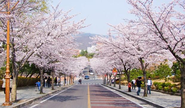 Hơn 100 phim Hàn đều chọn ngôi trường đại học tuyệt đẹp này làm bối cảnh ghi hình - Ảnh 15.