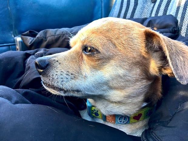 Người đàn ông bay hàng trăm chuyến trong suốt 3 năm, đón cả trăm chú chó từ bờ vực sinh tử về những gia đình mới - Ảnh 4.