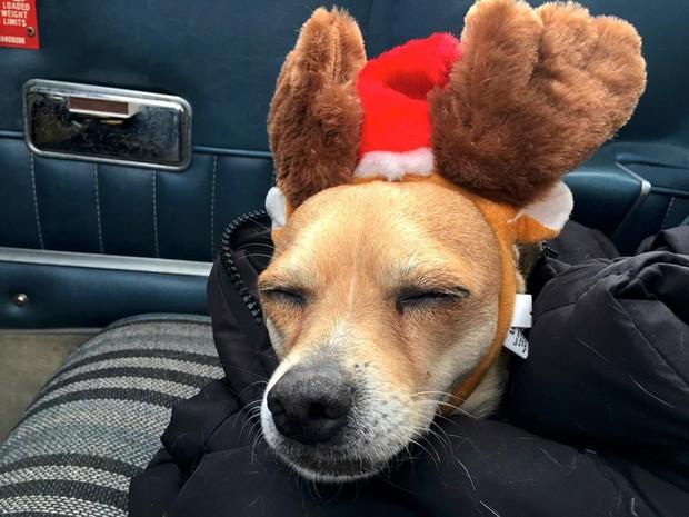 Người đàn ông bay hàng trăm chuyến trong suốt 3 năm, đón cả trăm chú chó từ bờ vực sinh tử về những gia đình mới - Ảnh 5.