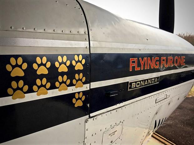 Người đàn ông bay hàng trăm chuyến trong suốt 3 năm, đón cả trăm chú chó từ bờ vực sinh tử về những gia đình mới - Ảnh 3.