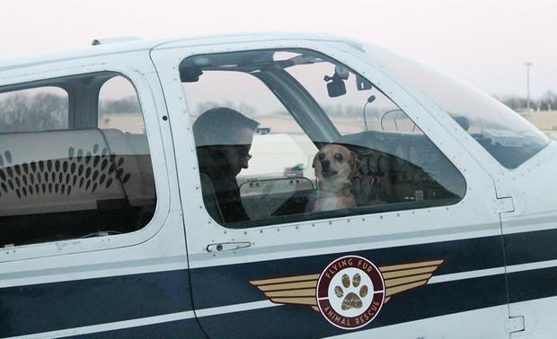 Người đàn ông bay hàng trăm chuyến trong suốt 3 năm, đón cả trăm chú chó từ bờ vực sinh tử về những gia đình mới - Ảnh 6.