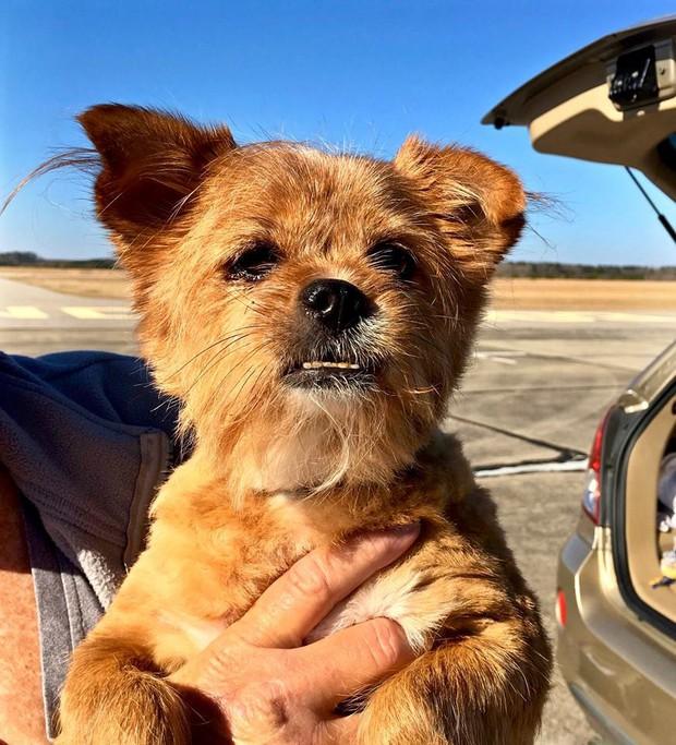Người đàn ông bay hàng trăm chuyến trong suốt 3 năm, đón cả trăm chú chó từ bờ vực sinh tử về những gia đình mới - Ảnh 2.