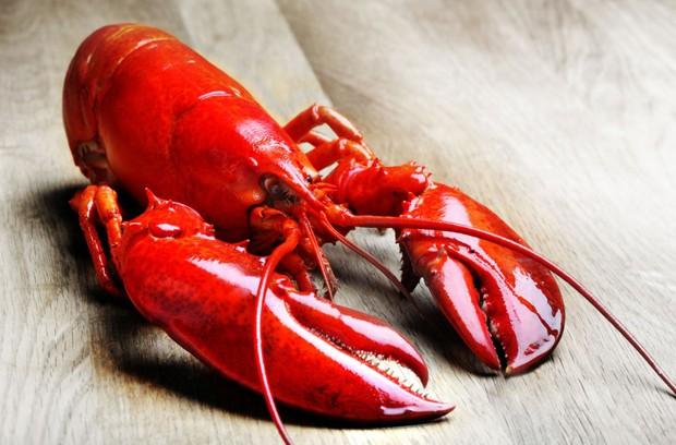 Từng là thứ phế phẩm, đem làm phân bón; món ăn này đã trở thành cực phẩm đắt đỏ trong các nhà hàng sang trọng - Ảnh 2.
