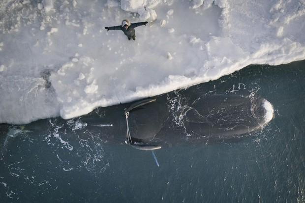 Cuộc sống thử thách lòng gan dạ của thợ săn vùng Bắc Cực: Sẵn sàng đương đầu với bão tuyết và cơn thịnh nộ của cá voi - Ảnh 1.