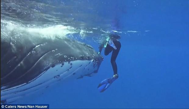 Thấy cá mập săn mồi lởn vởn, cá voi khổng lồ nặng 22 tấn lấy thân mình che chắn cho đội thợ lặn khỏi bị tấn công - Ảnh 3.