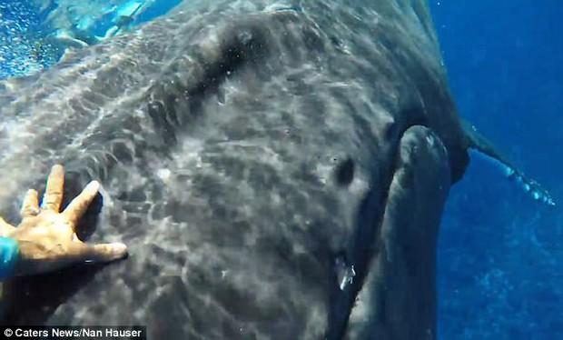 Thấy cá mập săn mồi lởn vởn, cá voi khổng lồ nặng 22 tấn lấy thân mình che chắn cho đội thợ lặn khỏi bị tấn công - Ảnh 6.