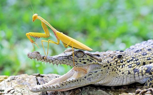 Chùm ảnh khoảnh khắc động vật khác loài cõng nhau - thế mới thấy thiên nhiên kỳ thú thế nào - Ảnh 4.