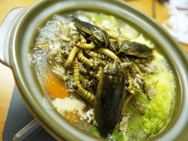 Có thứ kinh dị còn hơn cả tuyệt phẩm đồ ăn thiu thối, siêu mùi mang tên: Lẩu côn trùng! - Ảnh 10.