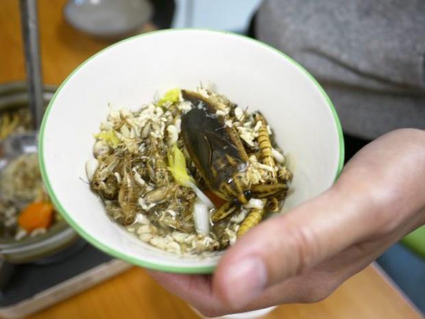 Có thứ kinh dị còn hơn cả tuyệt phẩm đồ ăn thiu thối, siêu mùi mang tên: Lẩu côn trùng! - Ảnh 11.