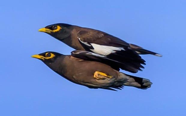 Chùm ảnh khoảnh khắc động vật khác loài cõng nhau - thế mới thấy thiên nhiên kỳ thú thế nào - Ảnh 7.