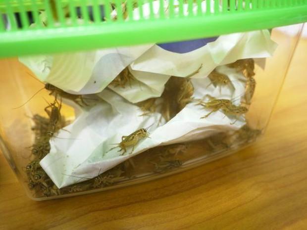 Có thứ kinh dị còn hơn cả tuyệt phẩm đồ ăn thiu thối, siêu mùi mang tên: Lẩu côn trùng! - Ảnh 3.