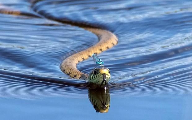 Chùm ảnh khoảnh khắc động vật khác loài cõng nhau - thế mới thấy thiên nhiên kỳ thú thế nào - Ảnh 1.