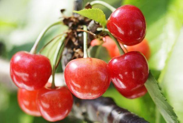 Vì sao một số loại trái cây Nhật Bản có mức giá siêu đắt? - Ảnh 4.