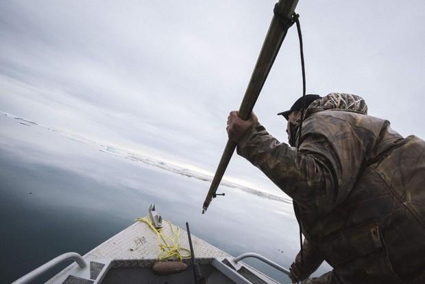 Cuộc sống thử thách lòng gan dạ của thợ săn vùng Bắc Cực: Sẵn sàng đương đầu với bão tuyết và cơn thịnh nộ của cá voi - Ảnh 5.