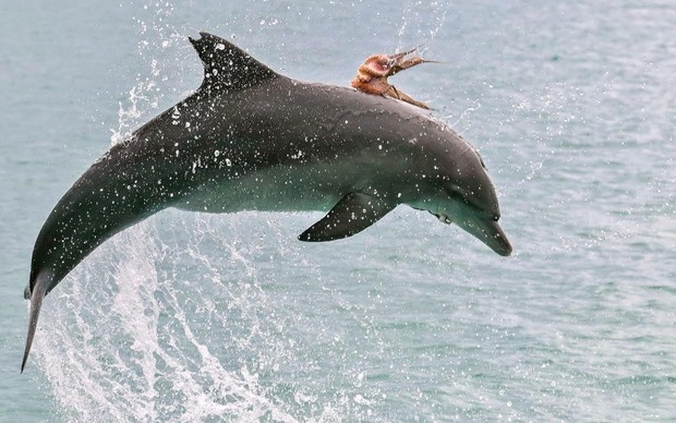 Chùm ảnh khoảnh khắc động vật khác loài cõng nhau - thế mới thấy thiên nhiên kỳ thú thế nào - Ảnh 2.