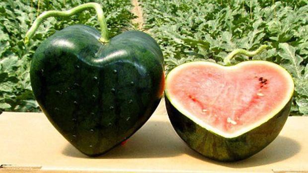 Vì sao một số loại trái cây Nhật Bản có mức giá siêu đắt? - Ảnh 6.