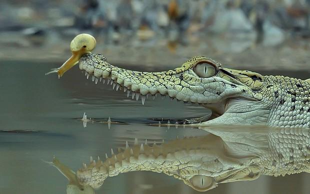 Chùm ảnh khoảnh khắc động vật khác loài cõng nhau - thế mới thấy thiên nhiên kỳ thú thế nào - Ảnh 3.