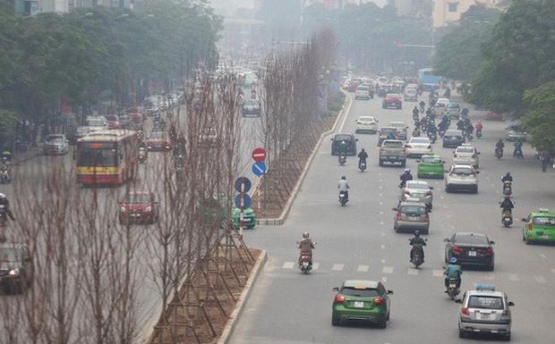 GS nói trồng thử cây phong lá đỏ ở Hà Nội không có thiệt hại ngân sách nếu thất bại - Ảnh 1.