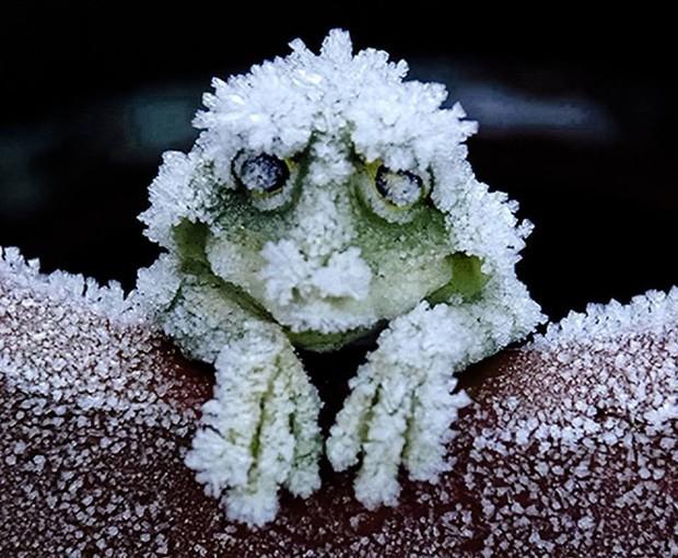 Đây chính là loài sinh vật máu lạnh chết cứng trong mùa đông, sống dậy vào mùa xuân - Ảnh 1.