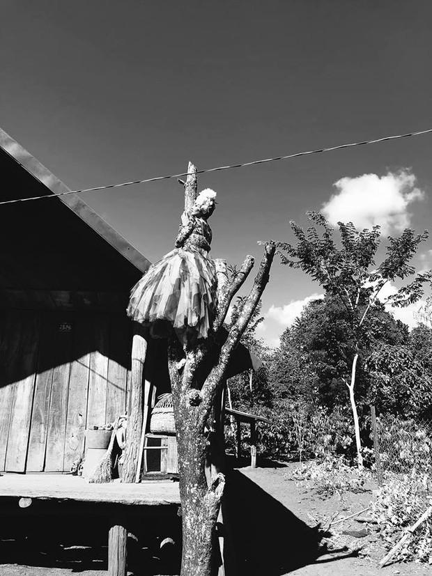 HHen Niê chịu khó mặc đầm dạ hội hoành tráng trèo cây cao, tạo dáng cực phiêu dưới cái nắng của núi rừng Đắk Lắk - Ảnh 5.