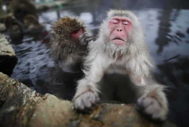 Chuyện nước Nhật: Tuyết rơi dày, lũ khỉ tuyết rủ nhau đu dây điện thoại cho đỡ lạnh chân - Ảnh 1.