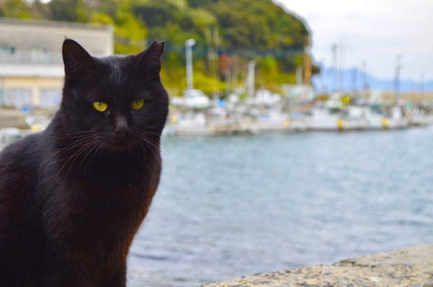 Mèo đen có thực mang đến vận đen? Hãy đọc bài này để thấy yên tâm hơn - Ảnh 5.