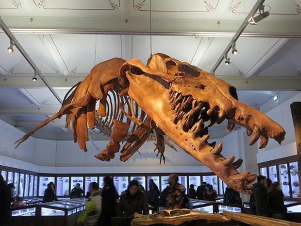 Phát hiện hoá thạch của quái vật thằn lằn chúa chuyên ăn cá voi ở Ai Cập - Ảnh 1.