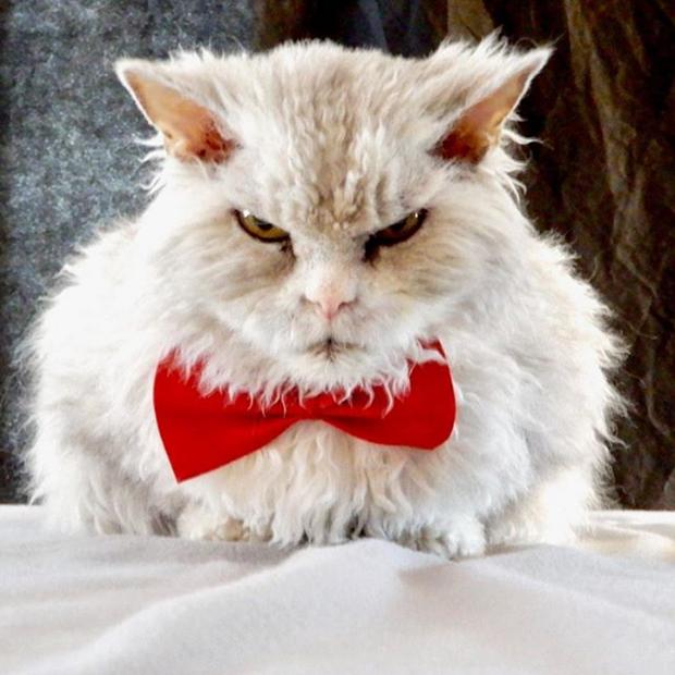 Gặp gỡ Albert: Con mèo lông xoăn trông lúc nào cũng cáu bẳn cục súc đang là hiện tượng MXH - Ảnh 4.