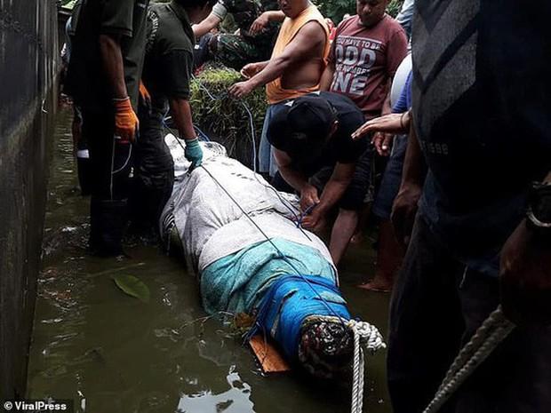 Cá sấu nhảy lên tường cao 2,5m, giết chết nhà khoa học nữ - Ảnh 4.