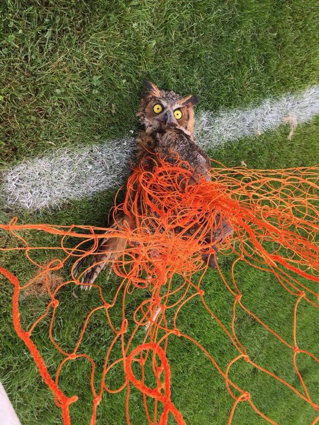 Chuyện động vật kẹt trong lưới sân bóng: tưởng đơn giản mà hậu quả nghiêm trọng không ngờ - Ảnh 2.
