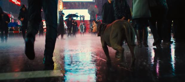 7 chi tiết thú vị ẩn giấu sau những cảnh bắn giết tàn khốc của trailer John Wick 3 - Ảnh 9.