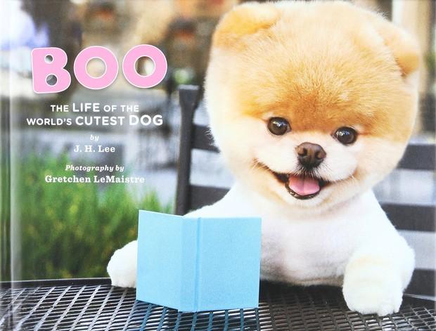 Boo - Chú chó đáng yêu nhất thế giới với hơn 16 triệu người theo dõi đã qua đời - Ảnh 1.