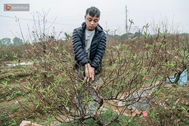 Gần 200 gốc đào của người dân Bắc Ninh bị chặt phá trong đêm: Tết năm nay còn chả có bánh chưng mà ăn - Ảnh 14.
