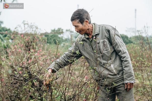 Gần 200 gốc đào của người dân Bắc Ninh bị chặt phá trong đêm: Tết năm nay còn chả có bánh chưng mà ăn - Ảnh 9.