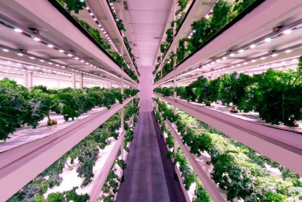 Nhờ một bài đăng trên Facebook, nhân viên ngân hàng này sở hữu start-up nông nghiệp trị giá hàng triệu USD - Ảnh 2.