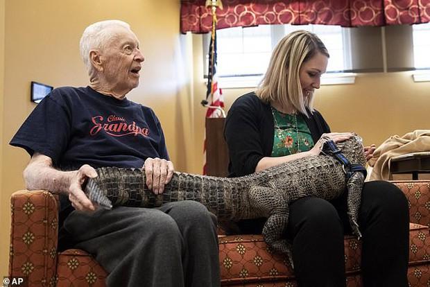 Gặp gỡ Wally: Chú cá sấu đáng yêu nhất quả đất, không cắn ai bao giờ lại còn thích được xoa đầu như chó - Ảnh 1.
