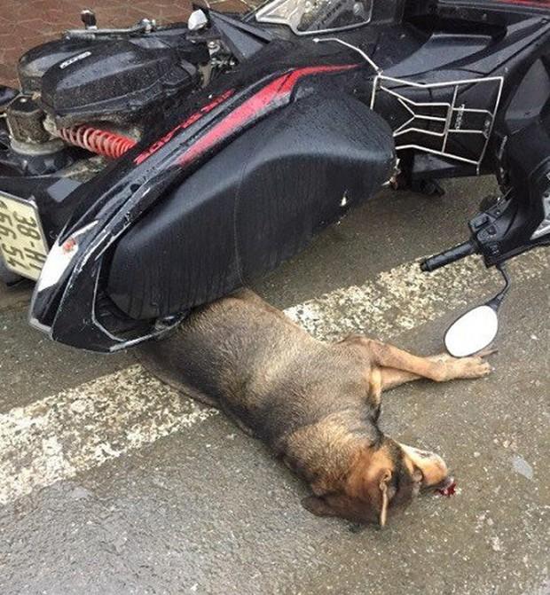 Hà Tĩnh: Chó điên làm náo loạn cả khu chợ trung tâm thương mại thị trấn, cắn bị thương hàng chục người - Ảnh 1.