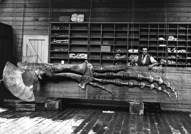 Lần đầu công bố ảnh những sinh vật to lớn kì bí ở Úc hơn 150 năm trước - Ảnh 2.