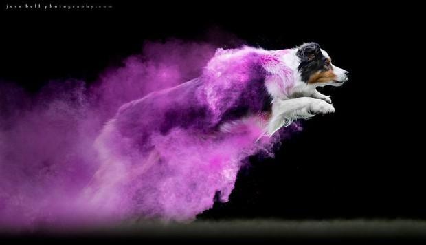Chụp ảnh boss có tâm level vô cực: Tạo dáng thần sầu với bột màu ảo hơn cả Photoshop - Ảnh 11.