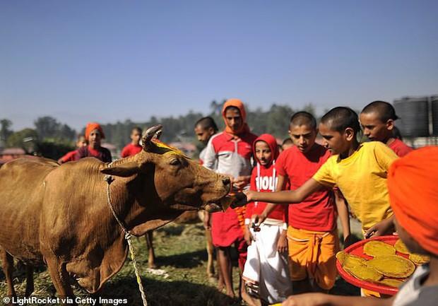 Một nhóm người ăn chay phản đối Ngân hàng Dự trữ Úc vì dùng mỡ bò để in tiền - Ảnh 1.