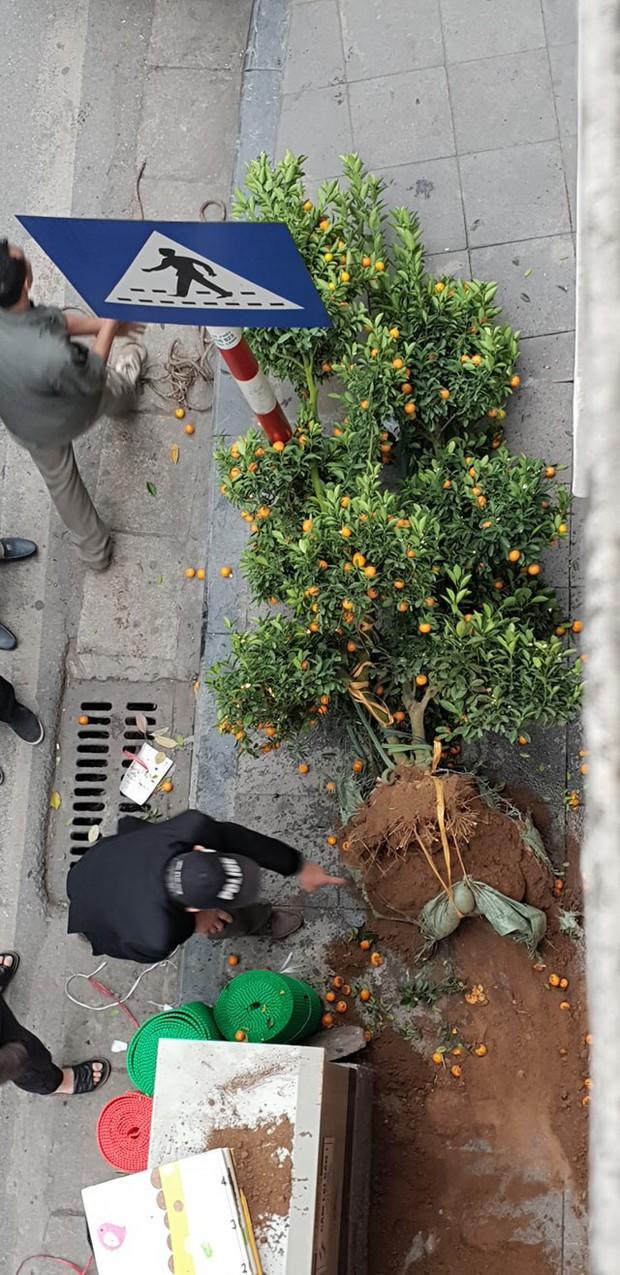 Clip: Dùng dây và thang tre đưa cây quất cảnh lên tầng chưng Tết và cái kết bi hài khiến nhiều người tiếc nuối - Ảnh 3.