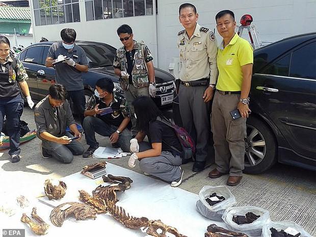 Từ bức ảnh Võ Tòng Thái Lan tay không đấm chết hổ, nhà chức trách bắt được băng nhóm buôn lậu động vật quý hiếm - Ảnh 2.
