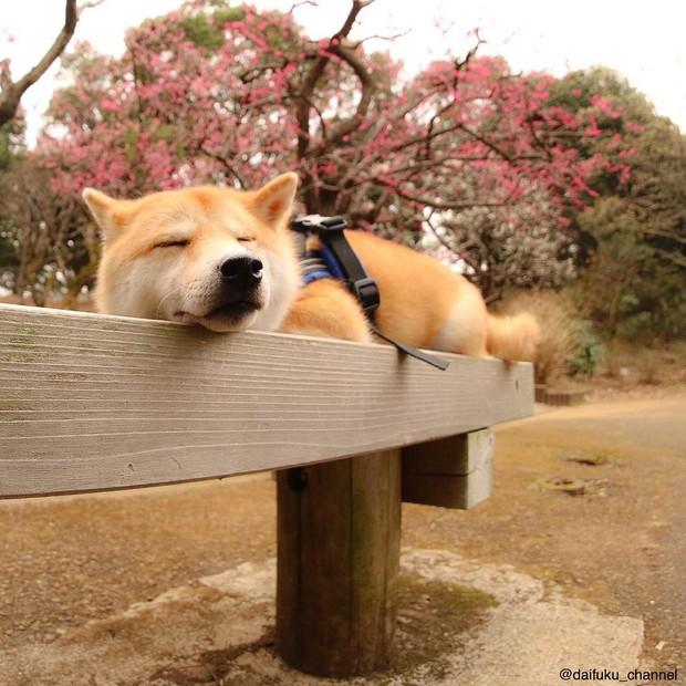 Không chỉ khôn ngoan và dễ thương, chú chó shiba biết dỗ trẻ đang khiến Internet tan chảy vì ngọt ngào quá! - Ảnh 12.