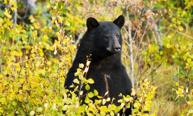 Bé 3 tuổi lạc trong rừng mưa lạnh suốt 2 ngày, khi được tìm thấy cậu nói đã đi chơi với gấu và mọi người tin câu chuyện này - Ảnh 3.