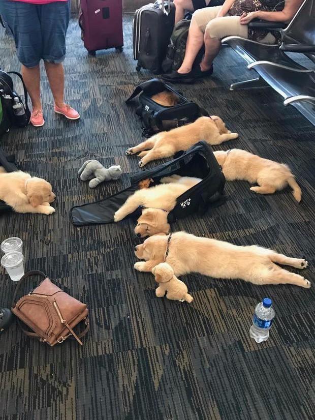 Chùm ảnh chứng minh: Sân bay là nơi hài hước nhất cũng là nơi cảm động nhất thế gian - Ảnh 7.