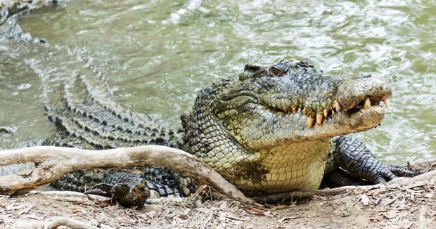 Cá sấu cắn con trai, ông bố Philippines cắn luôn cá sấu - Ảnh 1.