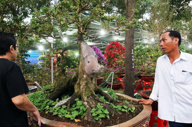 Cận cảnh cây khế đầu heo có giá nửa tỷ đồng được bày bán thu hút người dân Sài Gòn - Ảnh 1.
