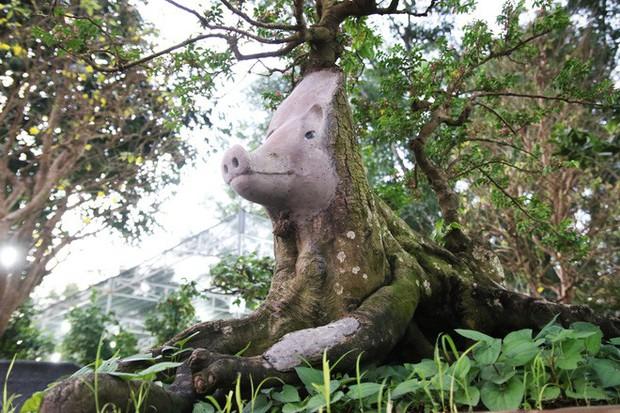 Cận cảnh cây khế đầu heo có giá nửa tỷ đồng được bày bán thu hút người dân Sài Gòn - Ảnh 12.
